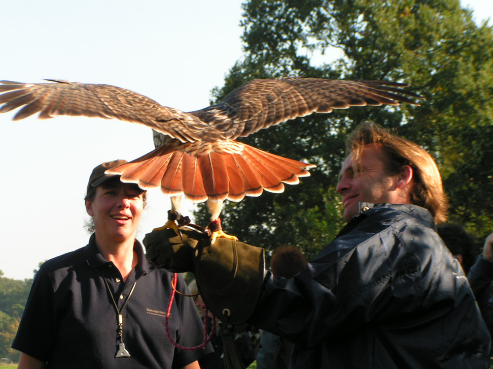 Roofvogel workshop Falconry Experenience Day